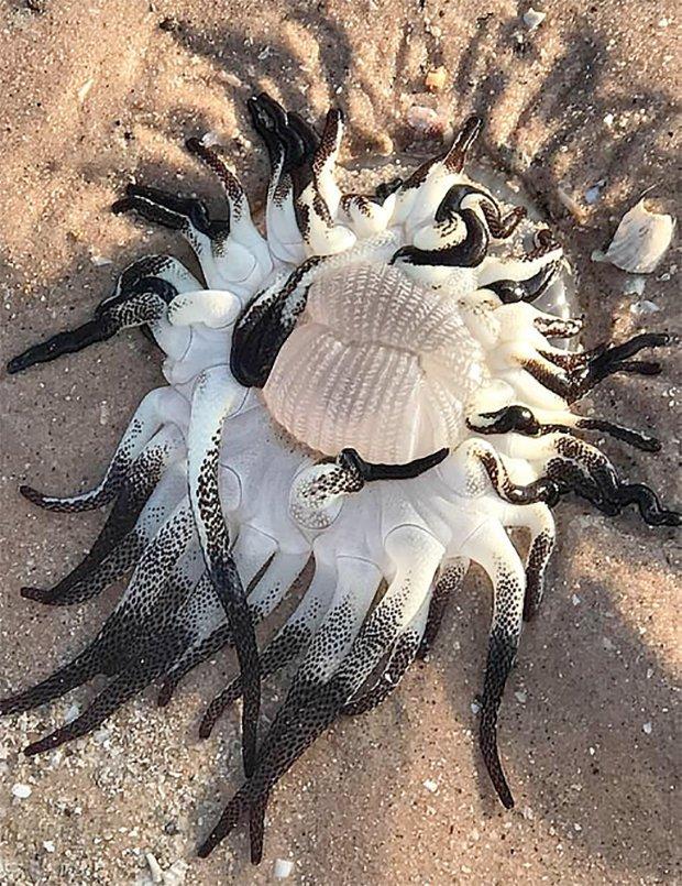 На берегу Австралии обнаружили чудовище с черными щупальцами