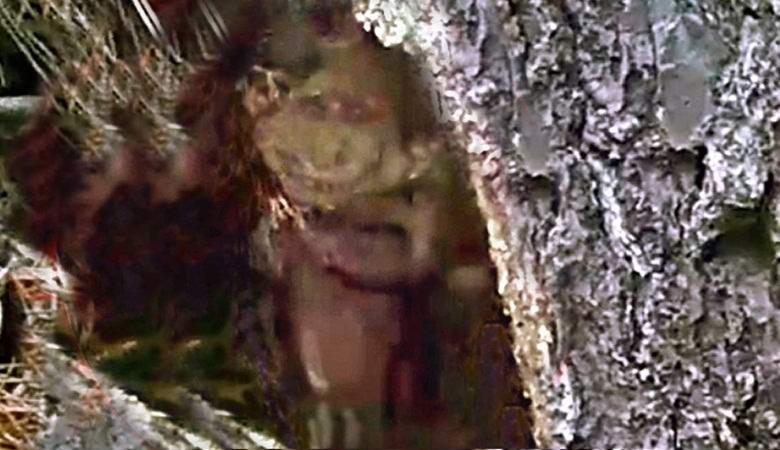 Житель США сфотографировал гнома в дупле дерева