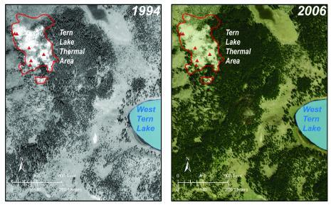 Супервулкан Йеллоустоун расширяется: деревья в округе погибают, не выдерживая жары