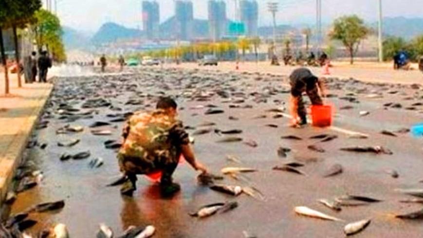 В Мексике прошел дождь из рыбы