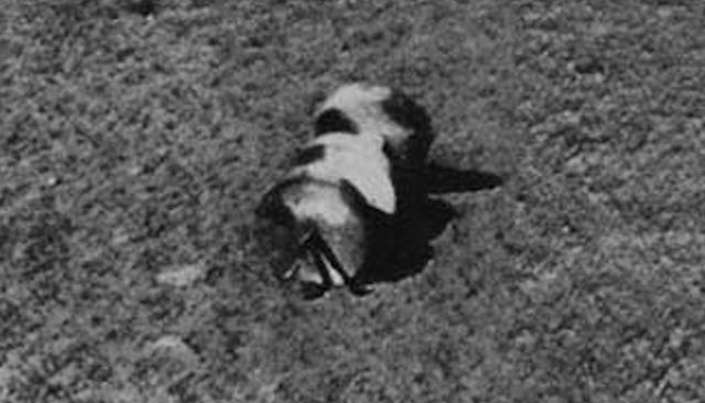 На фотографиях с Луны нашли колесную пару и винт