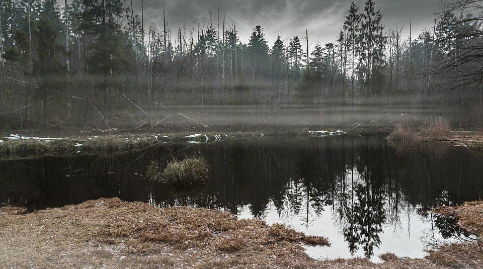 Углеродная бомба: в шведском болоте найдены предвестники глобальной катастрофы