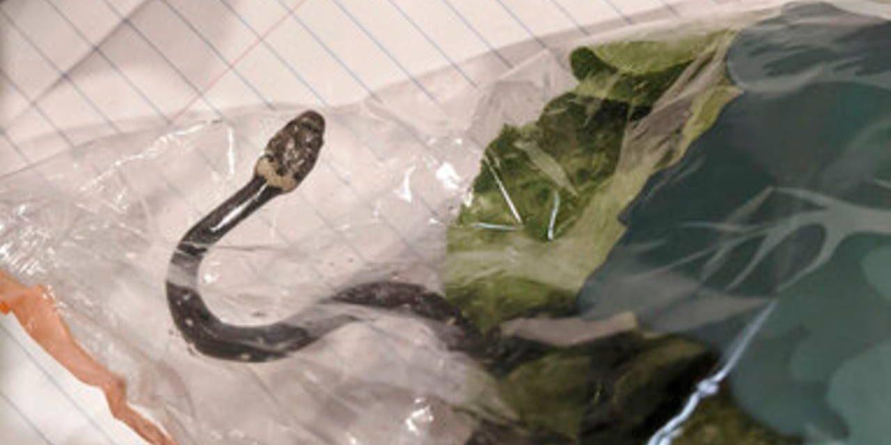Житель Сиднея нашел змею в салате, купленном в супермаркете
