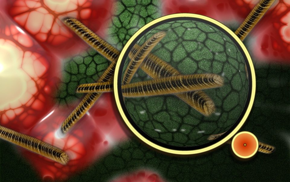 Найдена бактерия, которая не меняется на протяжении 175 млн лет