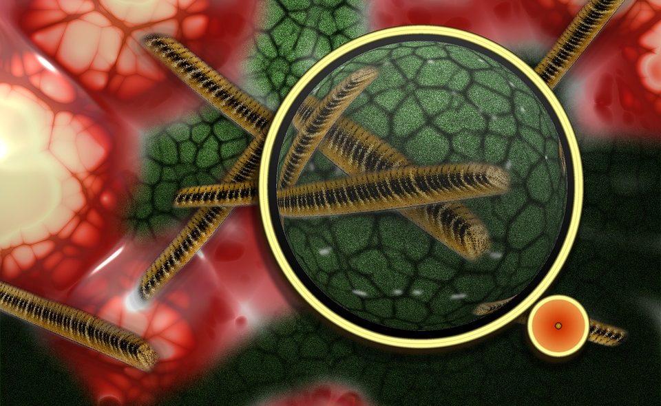 У некоторых вирусов обнаружили загадочный Z-геном
