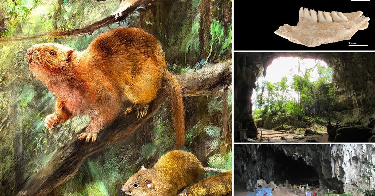 На Филиппинах обнаружили останки древних гигантских крыс: фото