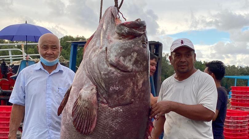 Житель Малайзии поймал окуня весом около 161 килограмма: фото