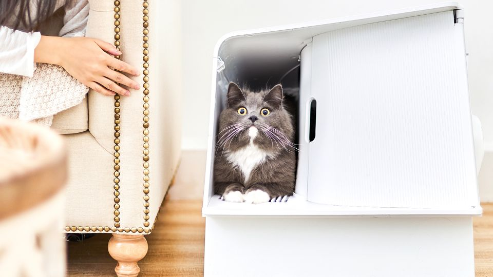 Товары для кошек: где их можно заказать в Москве и что нужно купить обязательно