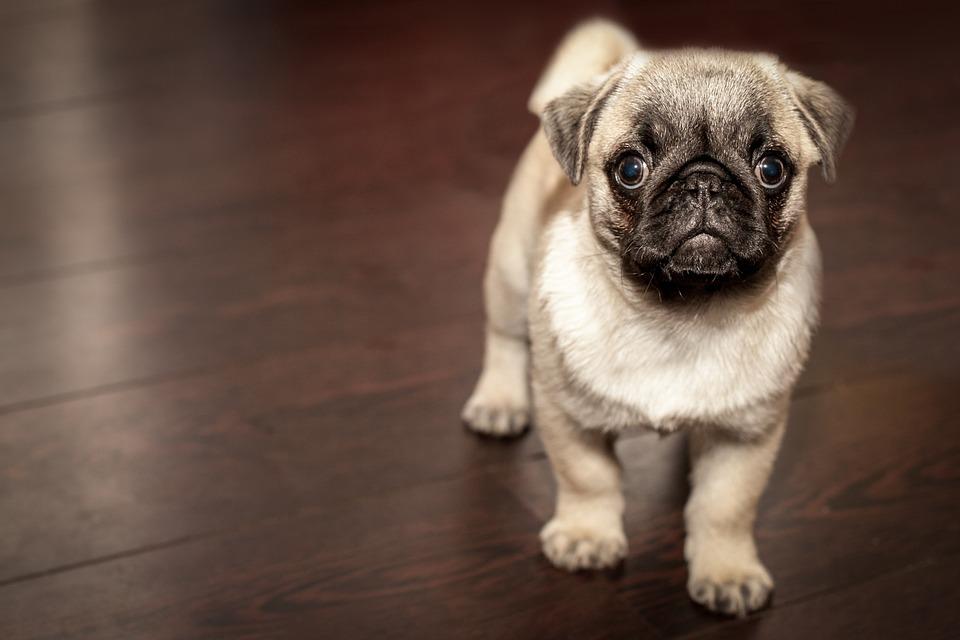 Как лечить собаку в домашних условиях