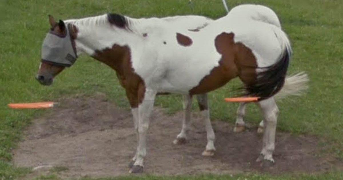 Лошадь с завязанными глазами напугала пользователя Google Maps