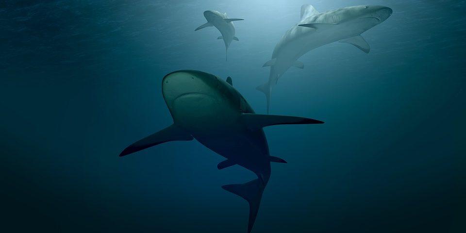 В США мужчина после нападения акул попал на прием к гинекологу