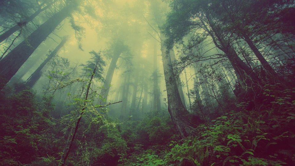 Нашлась американка, потерявшаяся в лесу полгода назад