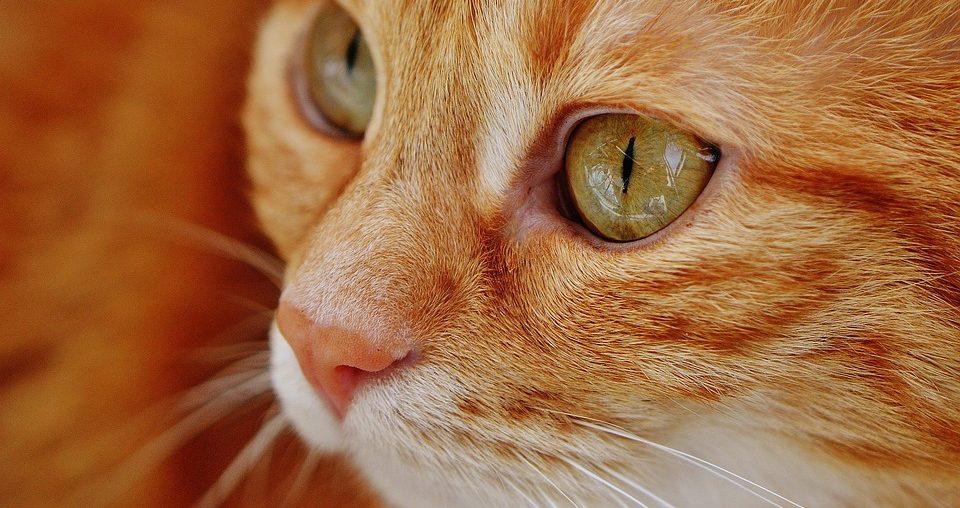 Кот спас жизнь своей хозяйке, обнаружив у неё проблемы со здоровьем
