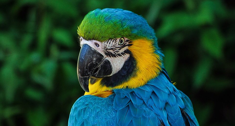 Советы и рекомендации по содержанию попугаев