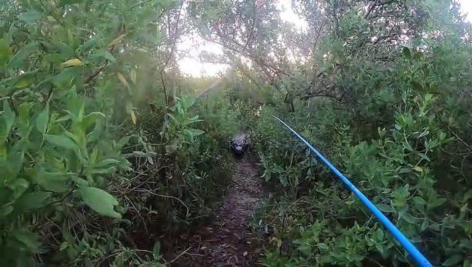 Мужчине на рыбалке пришлось убегать от трехметрового аллигатора