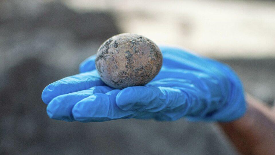 В Израиле на месте раскопок нашли куриное яйцо, которому 1000 лет