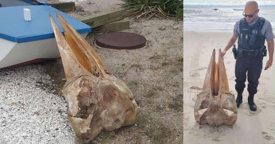 На берег Нью-Джерси выбросило череп в половину человеческого роста