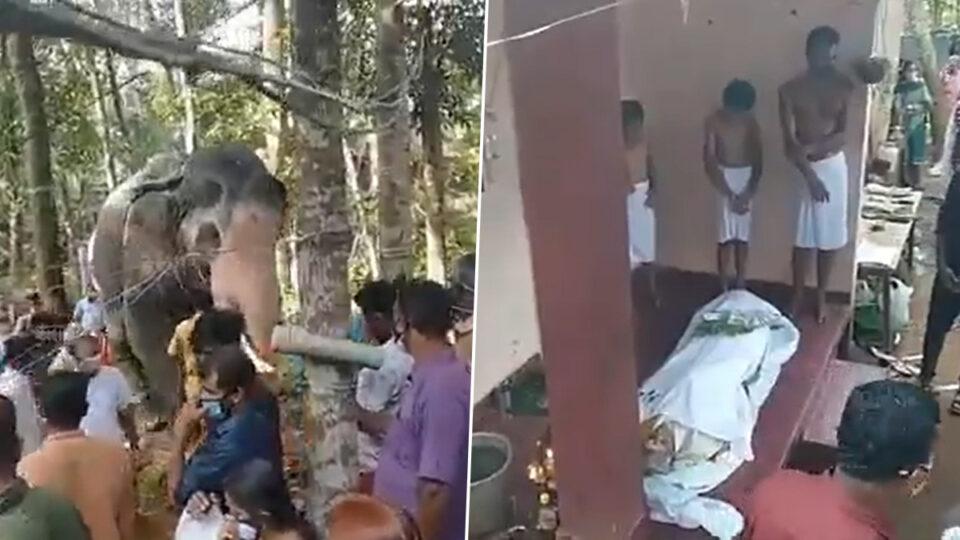 В Индии слон пришел проститься со своим умершим дрессировщиком