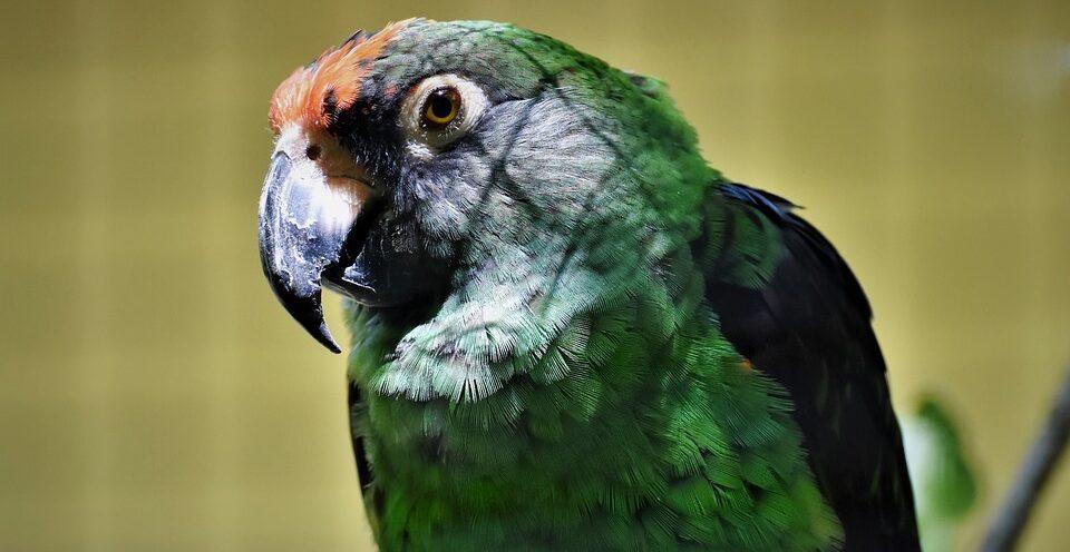 Британка пожаловалась в полицию на матерящегося попугая