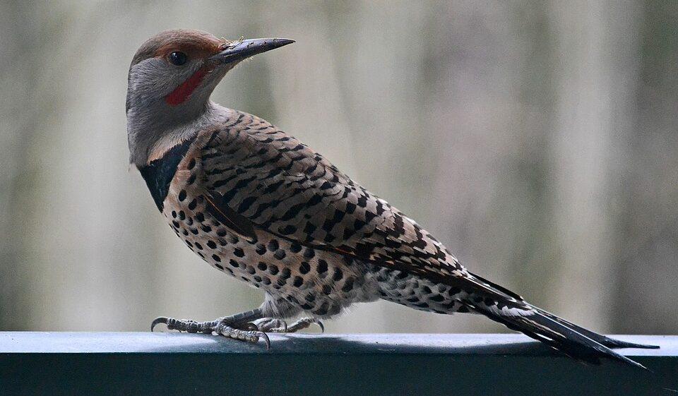 В США не прекращается загадочная массовая гибель птиц