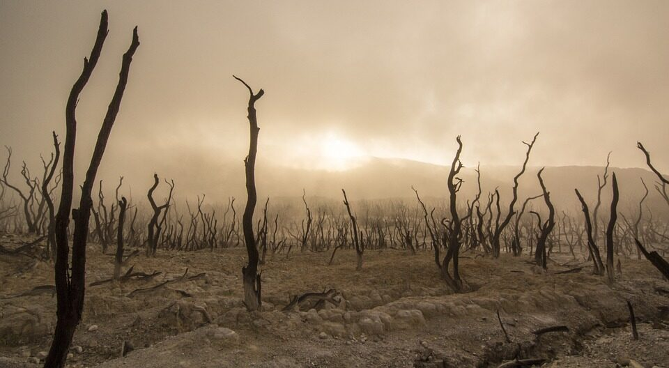 В ООН предупредили человечество о «следующей пандемии»