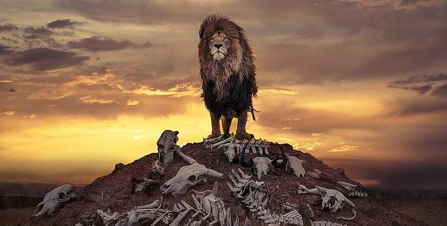 Необычный кадр: британский фотограф запечатлел льва над кучей костей