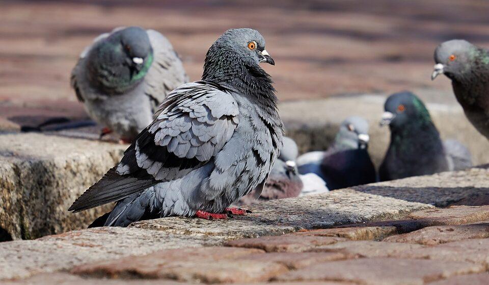 Студента оштрафовали за то, что он на улице покормил голубя