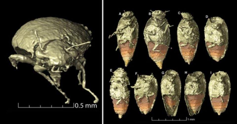 Палеонтологи нашли жуков в фекалиях динозавра, которым 230 млн лет