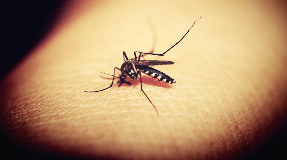 В 7 штатах США обнаружили комаров, которые переносят вирус Западного Нила
