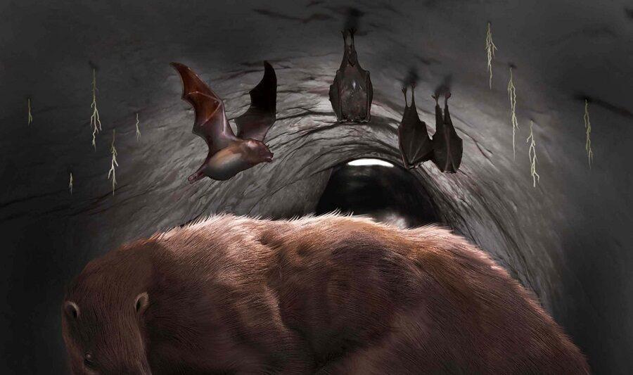 В аргентинской пещере нашли останки гигантской летучей мыши