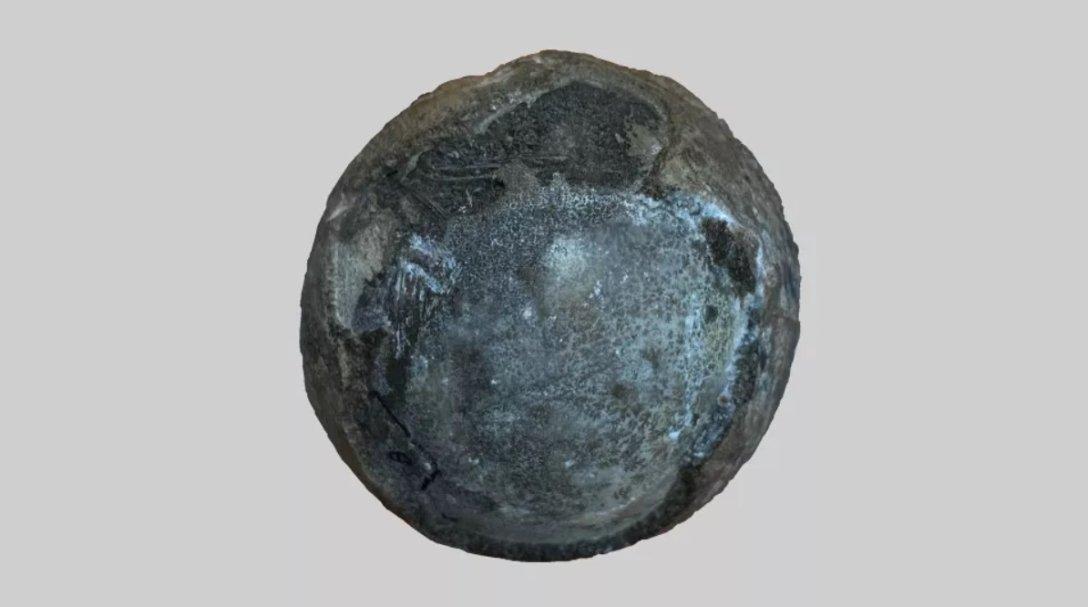Фермер обнаружил яйцо с эмбрион возрастом 90 млн лет