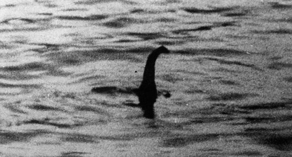 Ученые рассказали, кем на самом деле может быть «лохнесское чудовище»