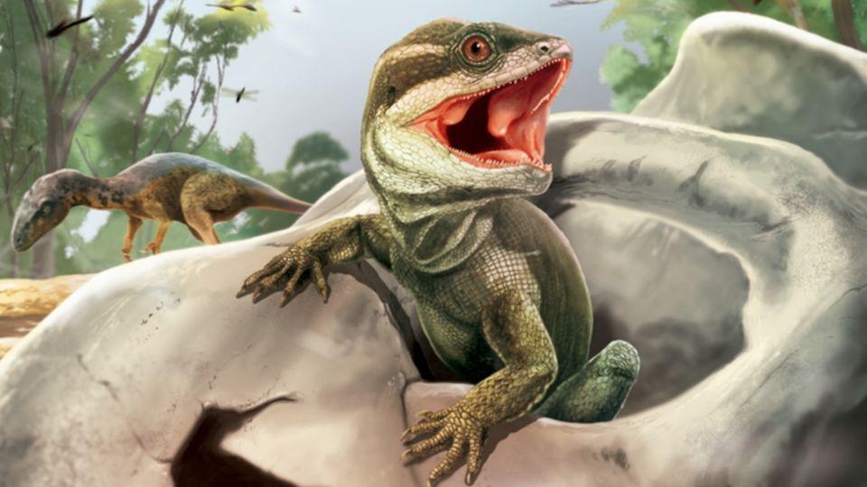 В Аргентине обнаружили череп, принадлежащий предку всех рептилий