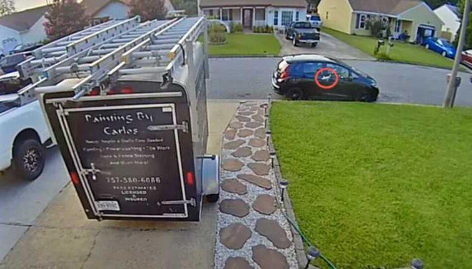 В США на припарковывай автомобиль с неба упала рыба