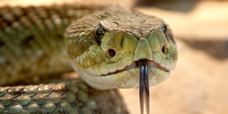 Житель Индии трое суток провел в камере со змеями