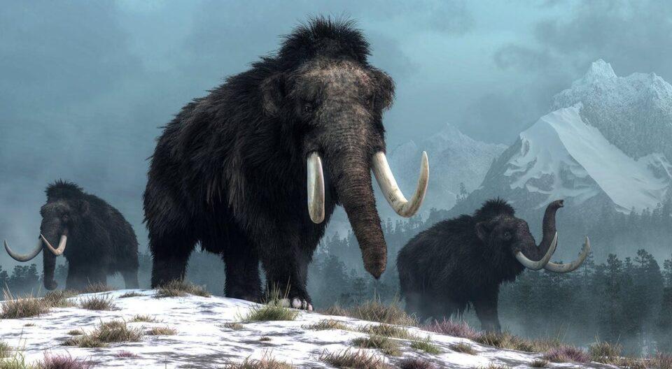 Генетики собираются «воскресить» вымершего шерстистого мамонта