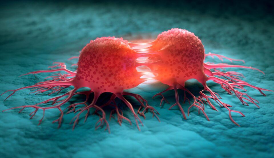 Найден простой способ замедлить рост раковых клеток