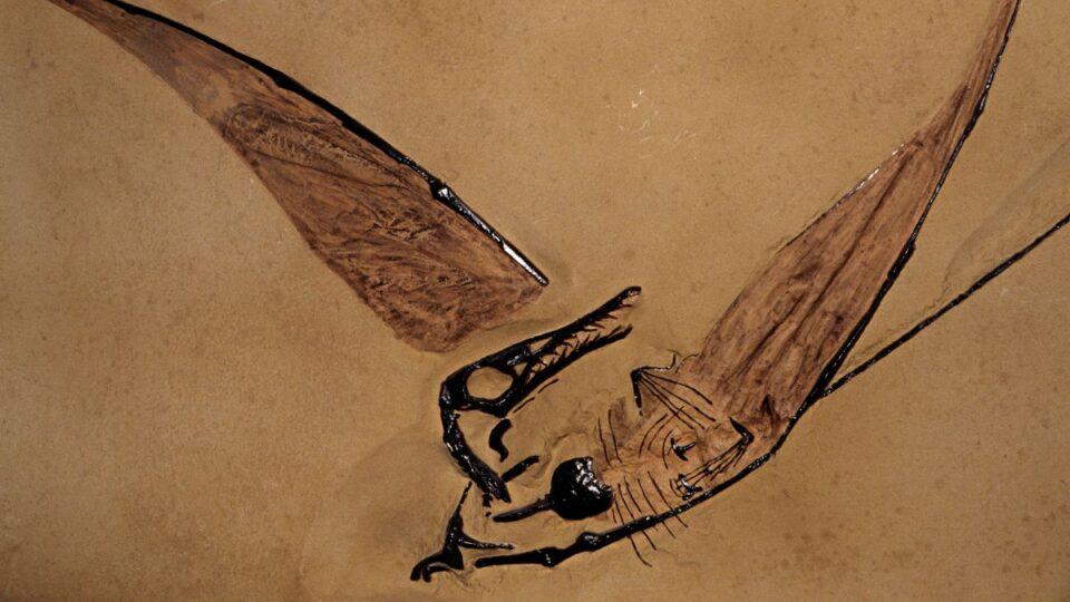 Жил 120 млн лет назад: археологи нашли предка современных птиц