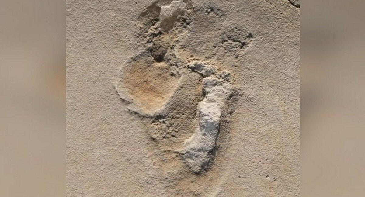 Археологи нашли следы древних людей возрастом 6 миллионов лет