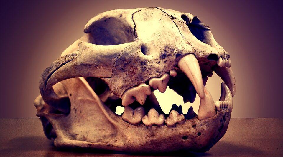 Найдено масштабное вымирание, о котором не знали ученые