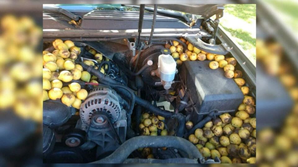 Запасы на зиму: белка спрятала в автомобиле 70 килограммов орехов