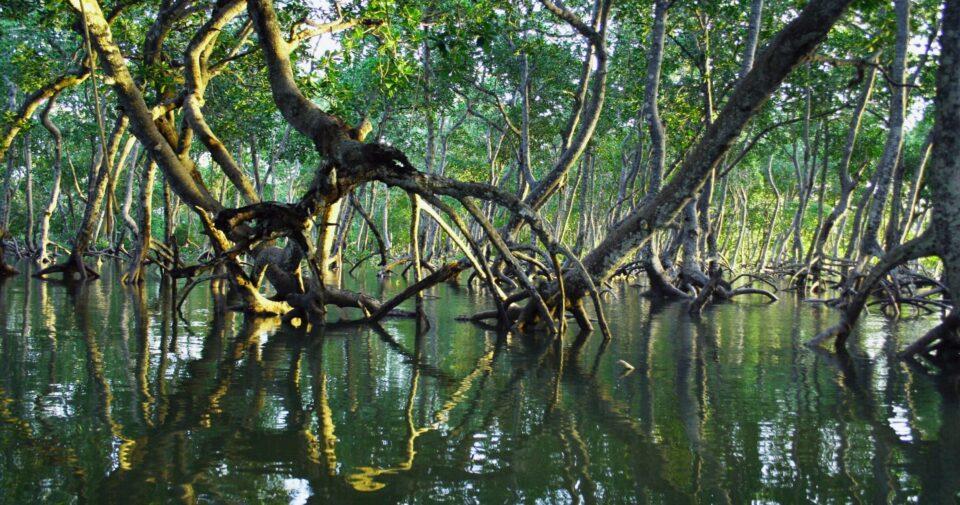 В Северной Америке обнаружили «застывший во времени» лес