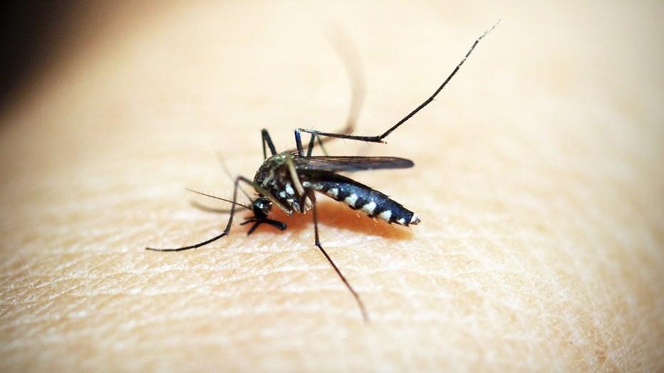 Сезонные реакции, аллергия в теплое время: диагностика поллиноза