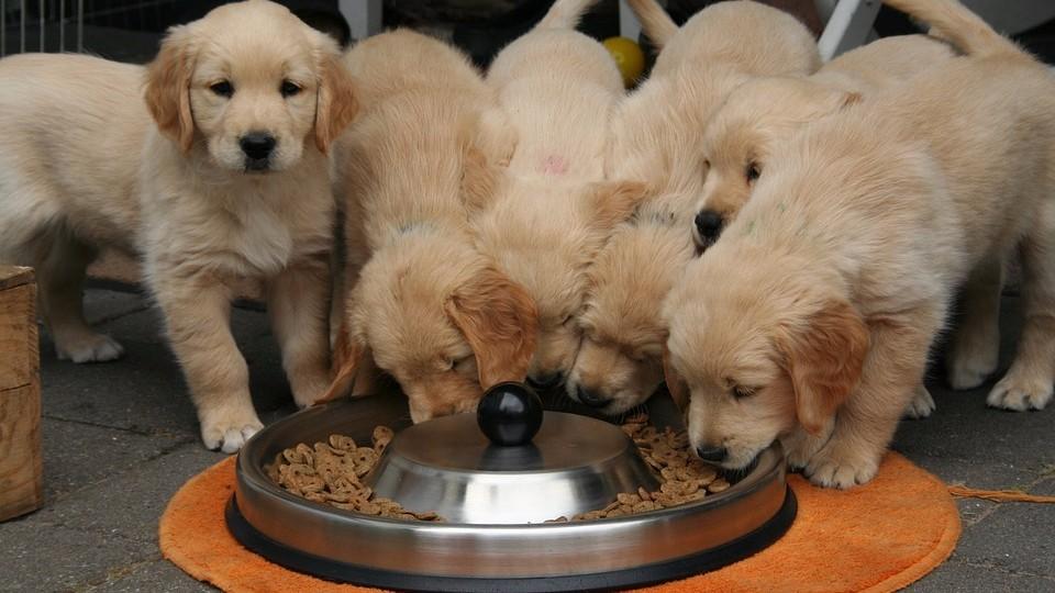 Выбираем корм для собаки — какие лучше?
