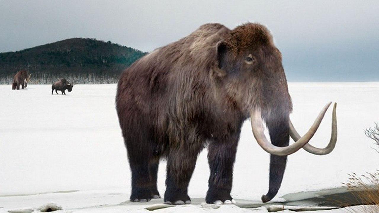 Ученые открыли новую причину вымирания мамонтов