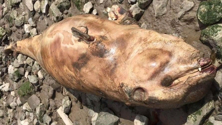 В Ливерпуле обнаружили странное существо