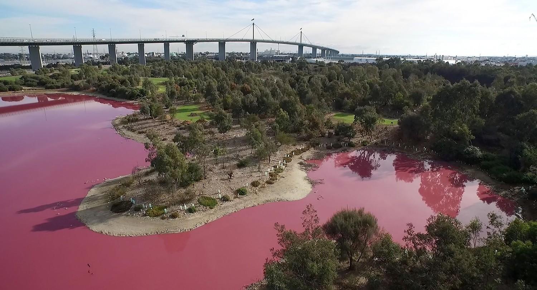 В Австралии появились розовые озера