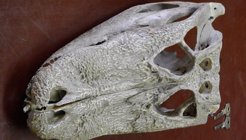 Палеонтологи нашли череп неизвестной рептилии