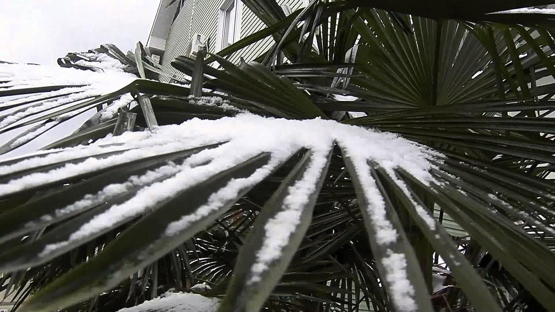 Гавайи припорошило необычно большим количеством снега