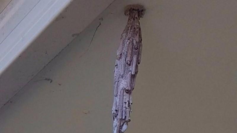 Житель США обнаружил в своем доме таинственный кокон